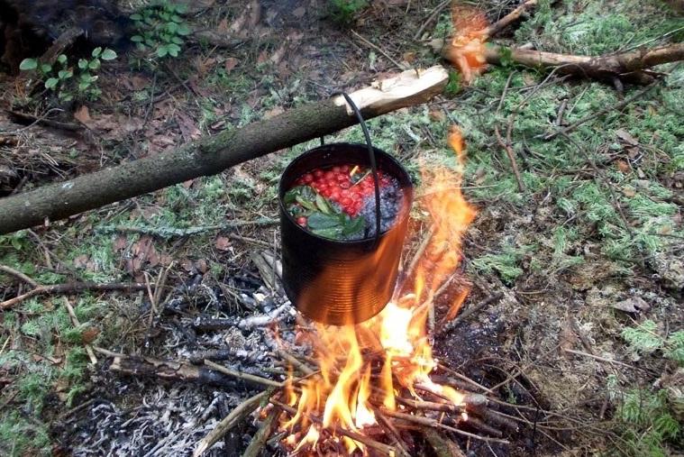 Поиск пищи в лесу