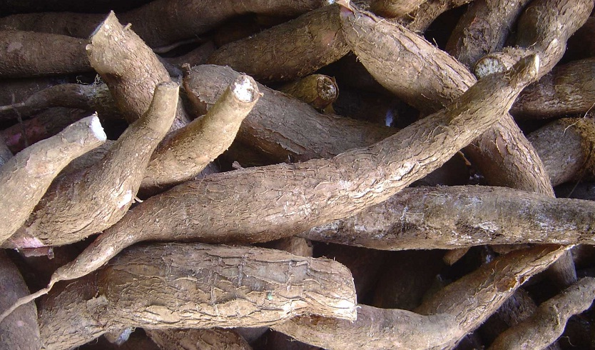 Съедобные корни
