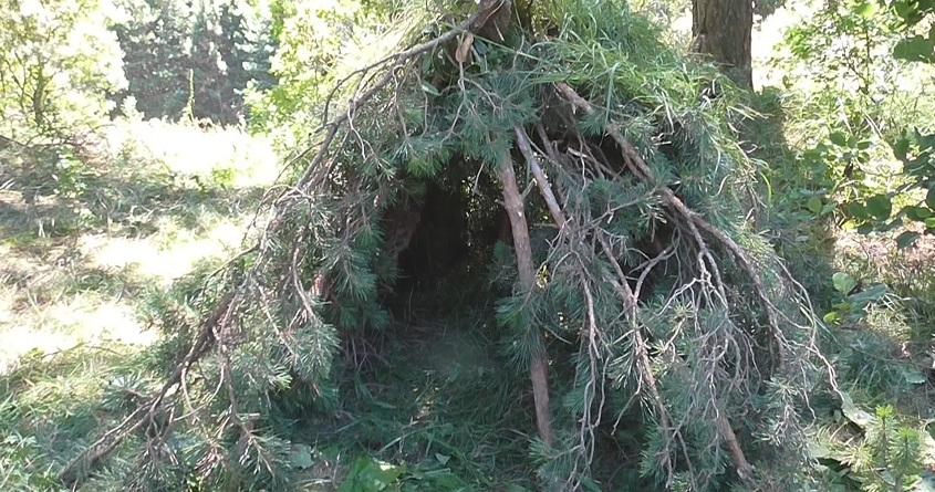 Укрытие в лесу